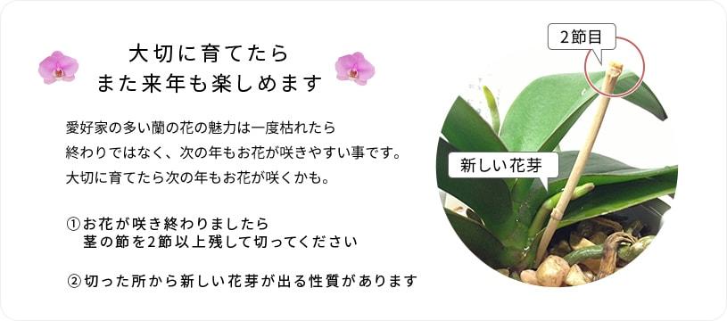 新しい花芽について