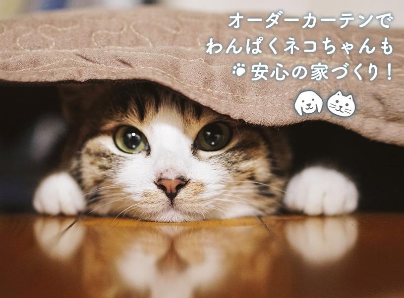 オーダーカーテンでわんぱくネコちゃんも安心の家づくり!